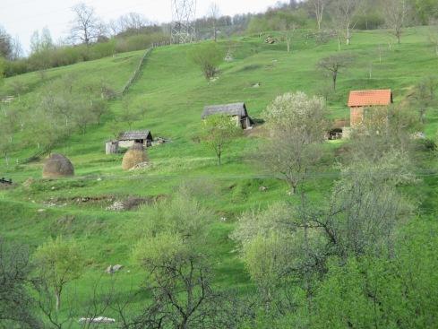 MontenegroD